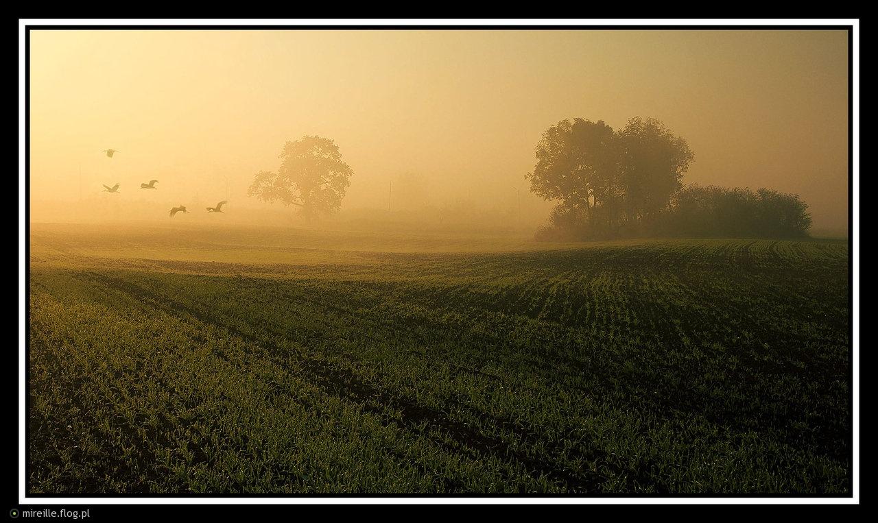 Spłoszone światłem wczesnego poranka