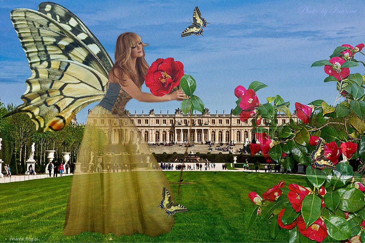 """Zanim powrócą kwiaty i motyle...""""Gdyby marzenia miały skrzydła, nikt nie chodziłby po ziemi."""" — Autor nieznany"""