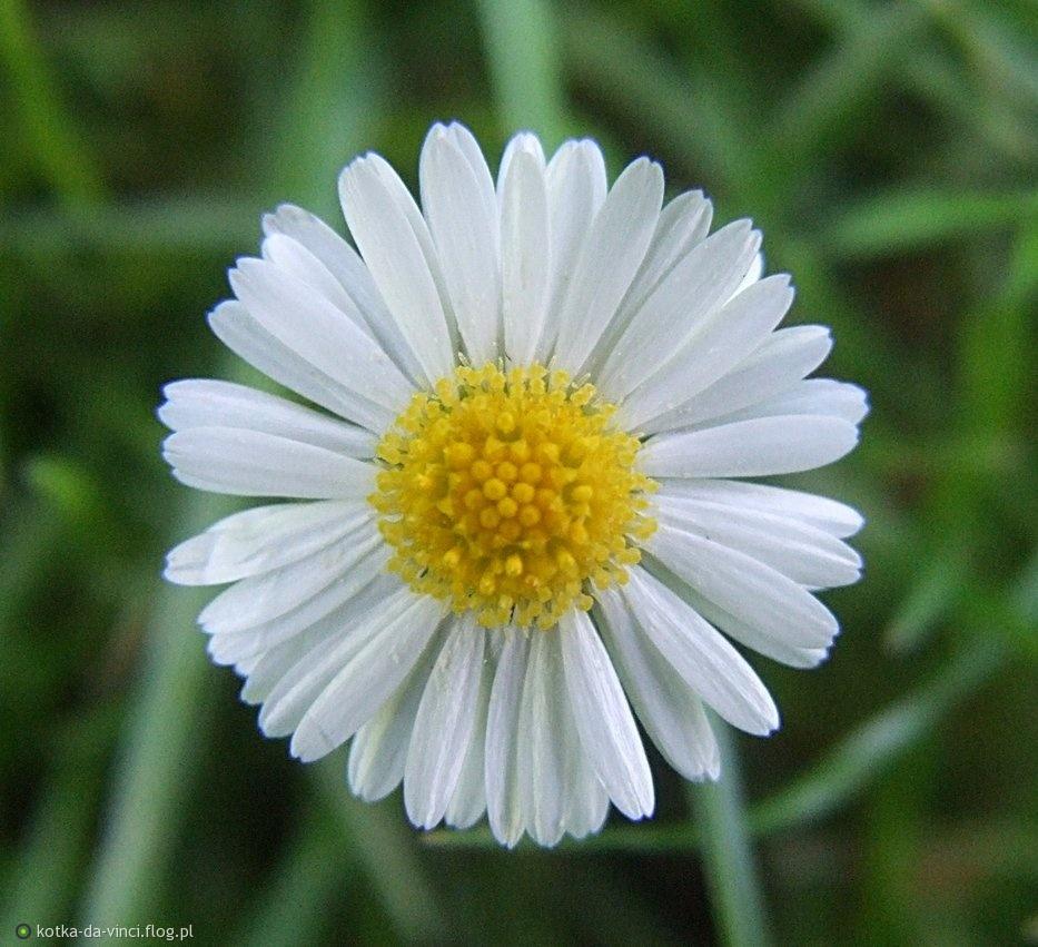 Elżbietko dla Ciebie z sympatią i pozdrowieniami    :)))