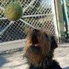 Mój pies Ujęcie drugie,W <br />ruchu