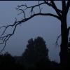 ::  Mrówko rudawa  ufnie prz<br />echodząca  na drugą stron<br />ę ścieżki   Sprężynko mie<br />dziana  która ur