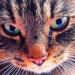 Mrrrrrrau :* :: &#039; Każda łza uczy nas<br /> prawdy.. &#039;Koniec fe<br />rii nastąpił :(Nutka dla <br />Was :DKocham Cię !!
